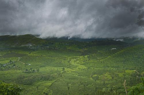 Tea estates under the clouds